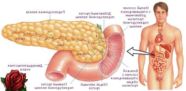 Que sintomas sinalizam sobre doenças no pâncreas?