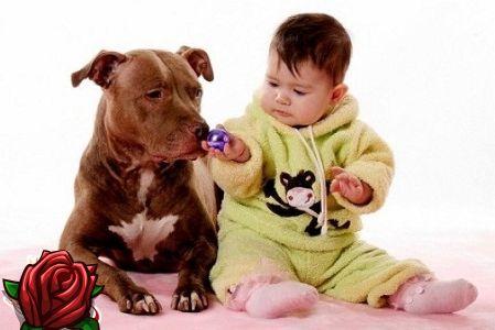 Kas koer hammustas koera? Kuidas seda vältida, valige lapse jaoks koer