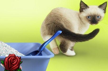 Jak se zbavit zápachu kočičí moči
