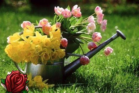 Aia hoolitsus kevadel
